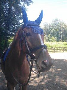 Centaur Crochet Horse Ear Net