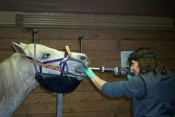 Dentist with Horse