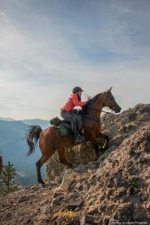 Endurance Rider on Horse