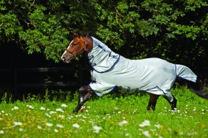 Horse in Fly Sheet