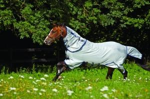 Horse in Fly Sheet