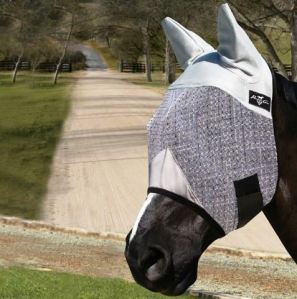 Horse in Fly Mask