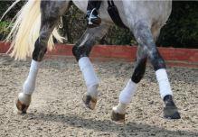 Horse in Polo Wraps