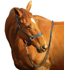 Centaur Breakaway Halter and Lead Rope Set