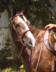 Bridled Horse