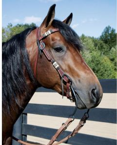 Horse in Western Headstall
