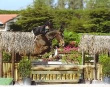 Horse and Rider Jumping