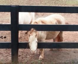 Fuzzy Pony
